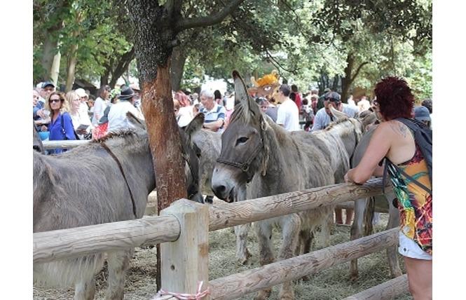 Salon des Agricultures de Provence 4 - Salon-de-Provence